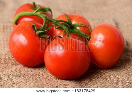 Tomatoes On Branch , Vegetable, Burlap Background. Market Fresh Vegetable Concept