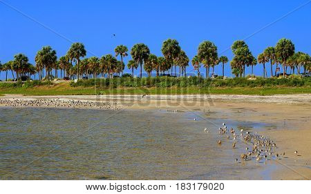 Beach with seabirds at the entrance of the Howard Park in Tarpon Springs Tampa Florida
