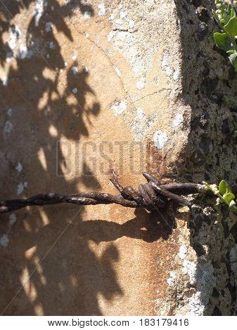 Barb wire on concrete post, Australia 2017