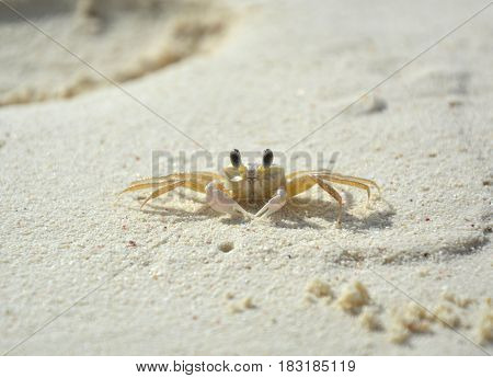 Little crab living on the beach on Klein Bonaire