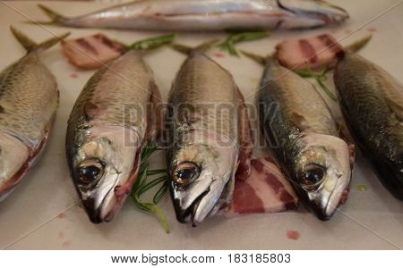 Pacific chub mackerel (Scomber japonicus) with pancetta and rosemary leafs ready to be baked in owen