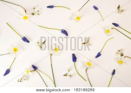 Cherry flowers daffodils murine hyacinths on white background. Floral botanical pattern. Flat lay. View from above