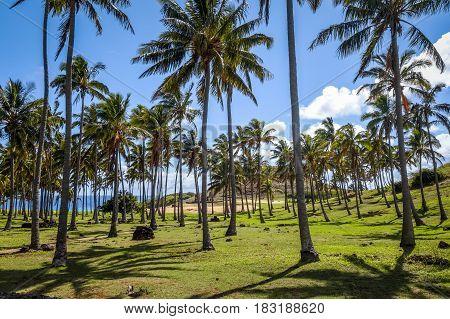 Anakena Palm Beach And Moais Statues Site Ahu Nao Nao, Easter Island