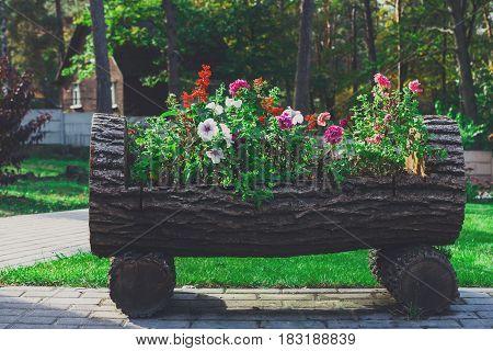 Wooden flowerbed with petunia flowers. Park landscape design, modern landscaping