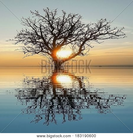 Silhouette of a tree in a flooded landscape at sunset. Bare tree reflecting in lake water