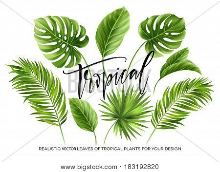 Tropical palm leaves set isolated on white background. Vector illustration EPS10