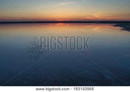 Sunset on the salt lake of Elton. Calm water and a branch of a plant in the foreground. Volgograd Region Russia.