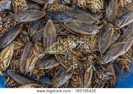 Giant Water Bug , animal in thailand