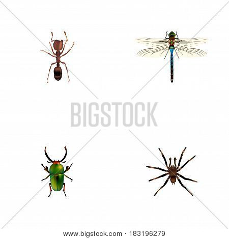 Realistic Emmet, Damselfly, Arachnid And Other Vector Elements. Set Of Hexapod Realistic Symbols Also Includes Emmet, Pismire, Green Objects.