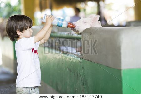 Lovely Boy Feeds Pig