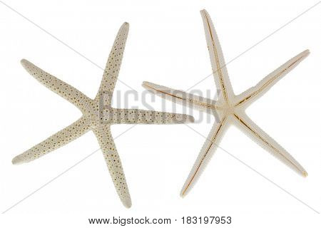 Front and back of two star fish, sea stars isolated on white background