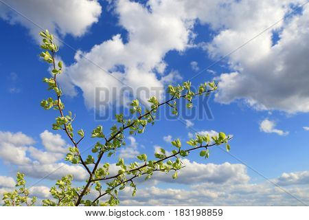 abstract green twig on nice clouds in sky background