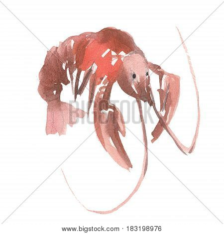 The red omar isolated on white background watercolor illustration in hand-drawn style.