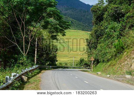 Landscape Of Terraced Rice Field In Northern Vietnam