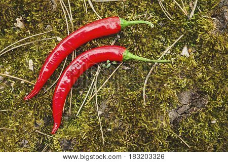 Red hot chili peppers on wooden background. Natural healthy food concept.