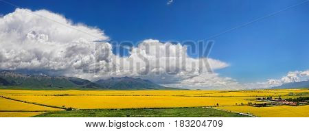 Panorama Of The Valley Of Yellow Flowers.