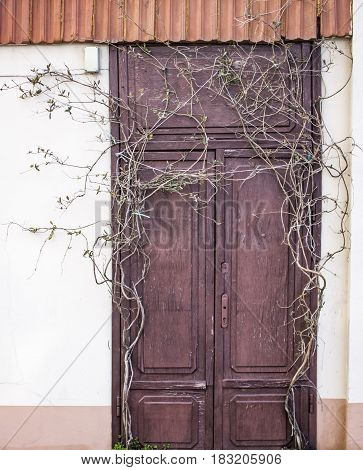 Wooden door and wall overgrown with a plant. Abandoned house covered by a plant .