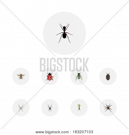 Realistic Spider, Arachnid, Wisp And Other Vector Elements. Set Of Bug Realistic Symbols Also Includes Wisp, Grasshopper, Ant Objects.