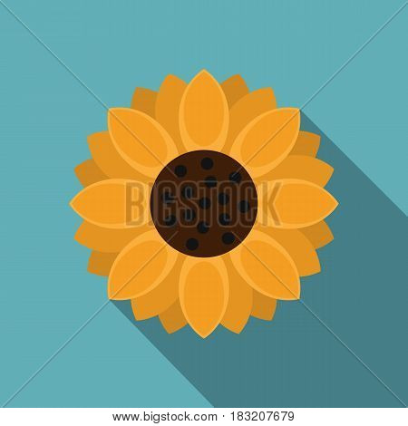 Orange gerbera flower icon. Flat illustration of orange gerbera flower vector icon for web on baby blue background