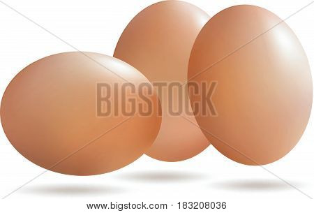 Vector Realistic eggs with drop shadow isolated on white background