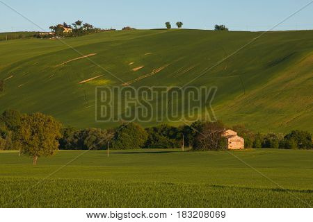 Isolated homestead or cottage on the green hills of the Marche region