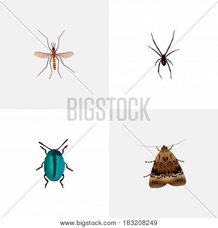 Realistic Gnat, Butterfly, Spinner And Other Vector Elements. Set Of Bug Realistic Symbols Also Includes Butterfly, Spider, Bug Objects.