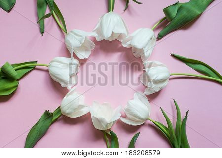 A few white tulips on a pink background in a round shape.