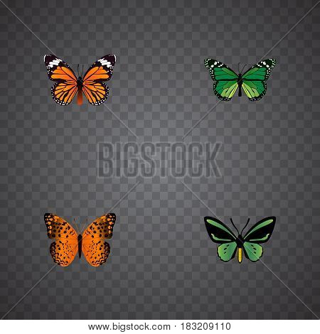 Realistic Monarch, Tropical Moth, Birdwing And Other Vector Elements. Set Of Butterfly Realistic Symbols Also Includes Fly, Orange, Butterfly Objects.