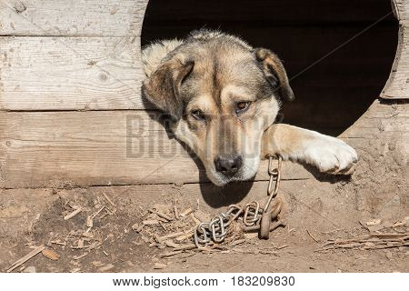The big guard dog on the chain is in the booth