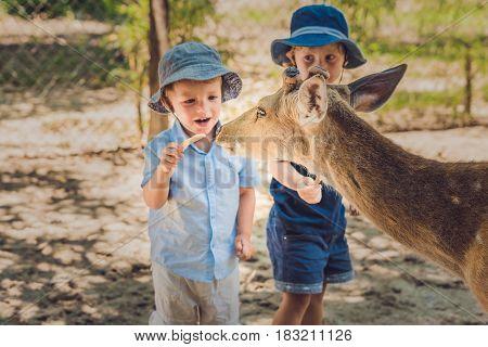 Little Boy Feeding Deer In Farm. Closeup