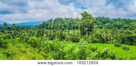 Rice tarrace and superb green jungle in Sidemen. Bali, Indonesia.