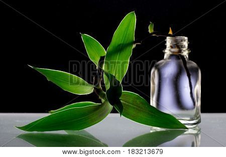 the leaves in the bottle on black background, light through green leaves, bottle on black background with leaves
