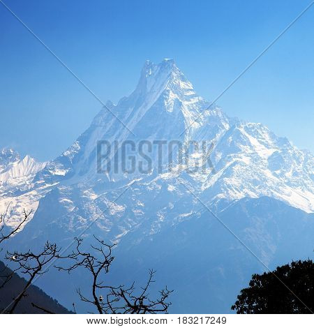 mount Machhapuchhre blue colored silhouette Annapurna area morning view Nepal