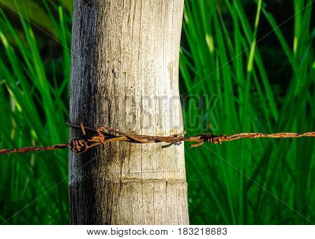 Close-up Of Rusty Barbed Wire Fence