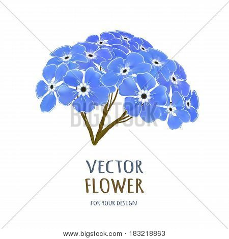 Hand drawn vector realistic illustration of Forget-me-nots flower isolated on white background.