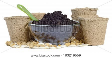 still life of jugs five cups of peat earth humus in a glass bowl a green plastic scoop seeds of nasturtium pumpkin and zucchini seedlings to plant isolated on white background