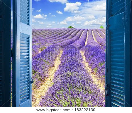 Lavender field rows with summer blue sky through wooden shutters, France