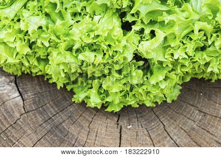 Fresh green lettuce on the textured wooded background. Macro shot.
