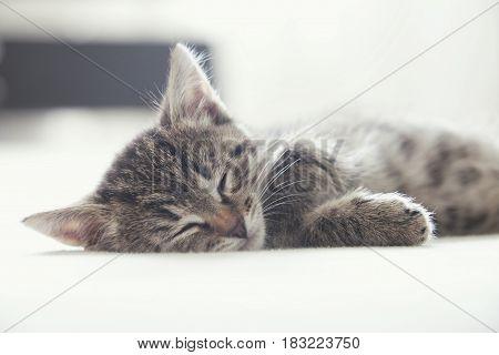 Sleeping cute little tabby kitten. Striped cat