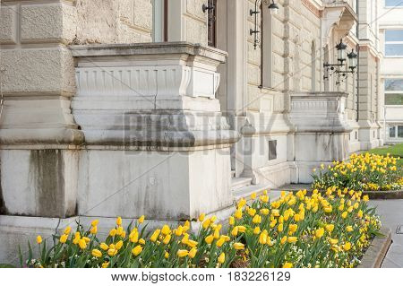 beautiful facade of university with flowerbed full of yellow tulips