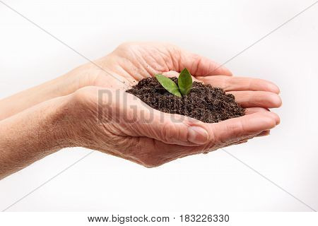 Start new life. Close up of dark soil on female hands. Isolated