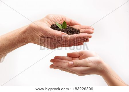 Keep safe your life. Close up of female hands holding soil. Small palms are under older ones. Isolated