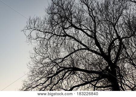 Old Tree Against Blue Sky