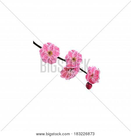 Very high quality original trendy vector illustration of Japanese plum blossom or red cherry flower
