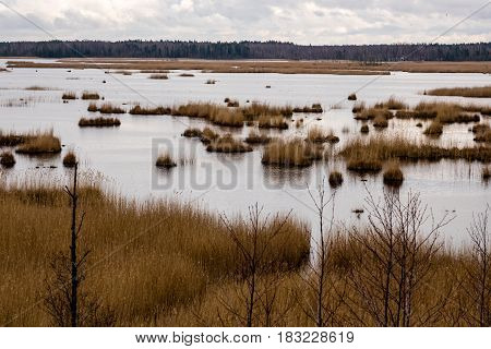 Swamp View With Lakes