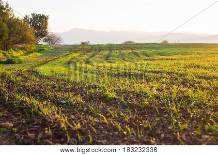 green rural field at the early morning.