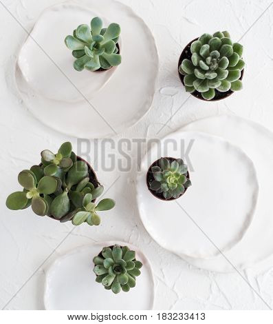 Minimalistic still life with ceramic plates and green succulents on white textured background, stylish home decor
