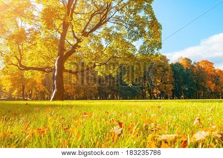 Autumn picturesque landscape in sunny autumn landscape park lit by sunlight -autumn park in sunshine. Sunny autumn landscape of autumn park with golden trees - autumn park nature in soft sunny light