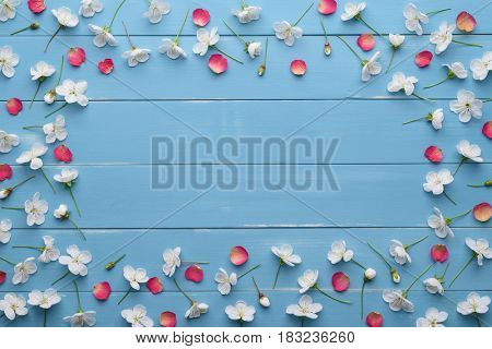 Frame of white flowers of cherry tree and red rose petals. Floral decoration on a blue wooden background. Template for design. Flat layout, top view