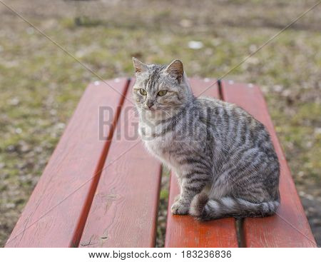 Beautiful striped cat sitting on a wooden bench in the garden